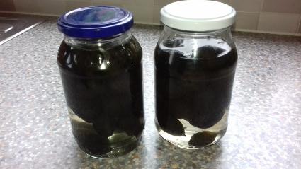 Lacto – Fermented Green Walnuts